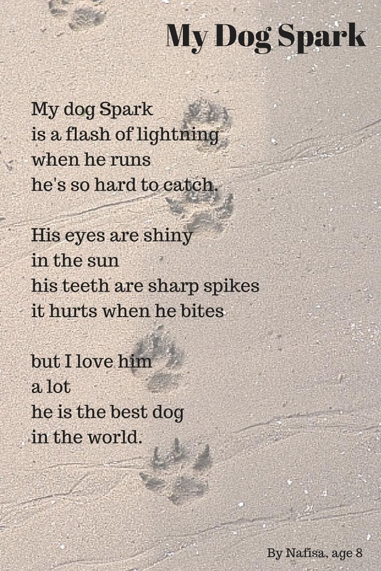 My Dog Spark