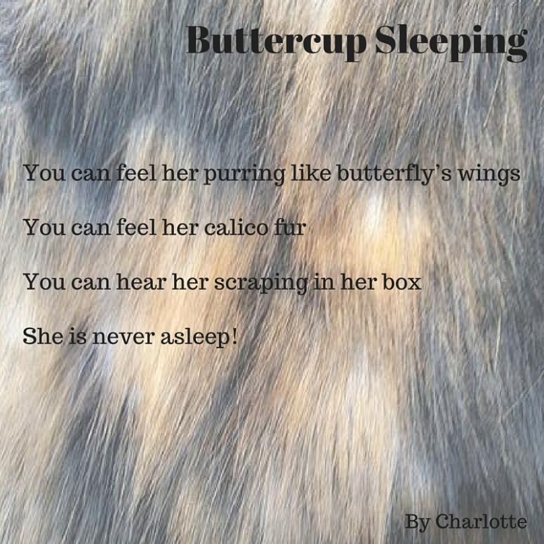You can feel her purring like butterfly's wingsYou can feel her calico furYou can hear her scraping in her boxShe is never asleep!